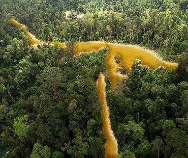 Vue aérienne d'une forêt tropicale sillonnée par une rivière dorée