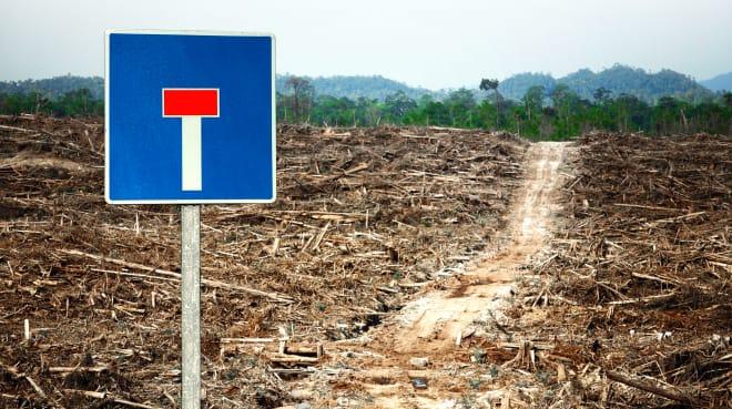 """Photomontage: un panneau """"cul-de-sac"""" au bord d'un chemin au milieu d'une zone déboisée et qui mène jusqu'à une forêt tropicale encore intacte"""