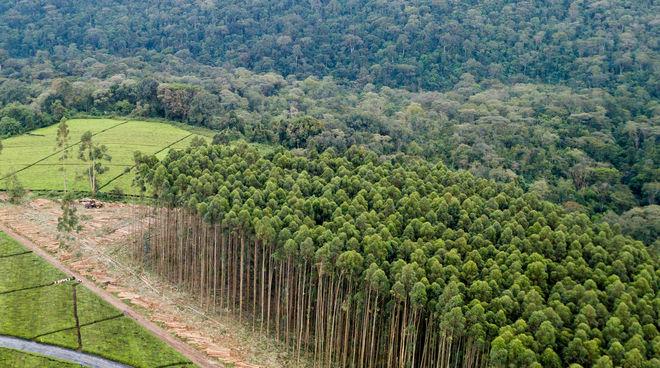À l onu les plantations ne sont pas des forêts sauvons la forêt