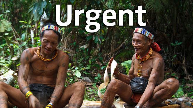 Deux indigènes du peuple Mentawaï dans leur forêt sur l'île de Siberut en Indonésie