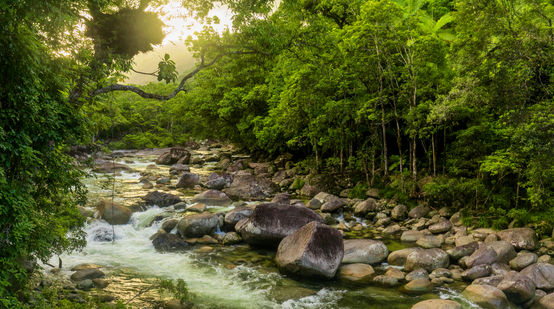 Parc national de Daintree en Australie