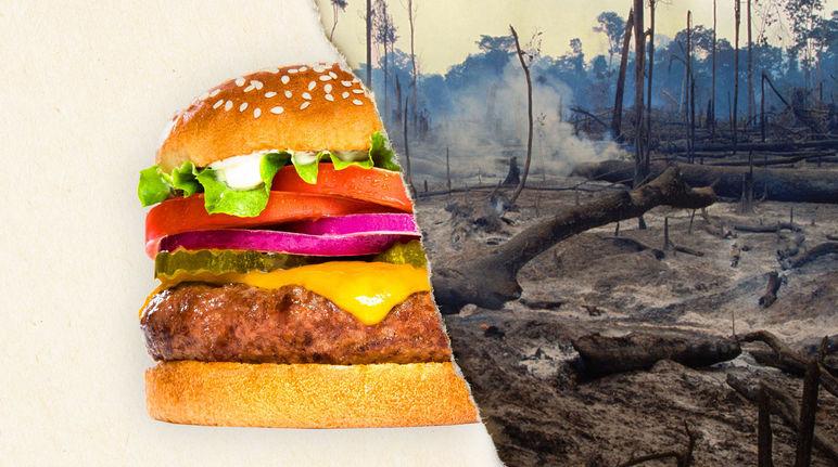 Burger King Carte Geographique.Burger King Stop A La Viande Issue De La Deforestation