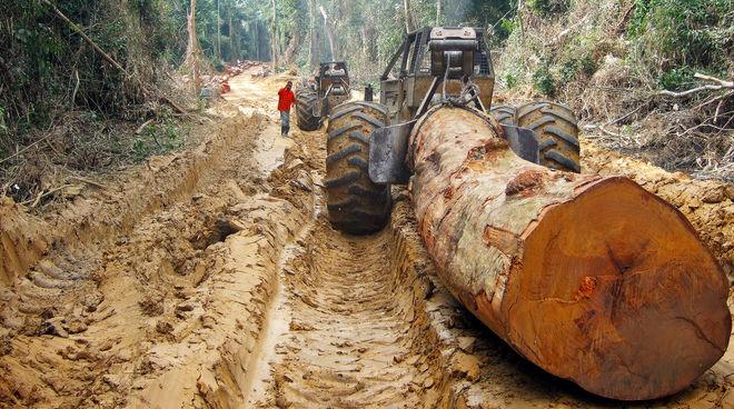 Une grume d'arbre géant transportée sur une route dans une forêt tropicale  en Afrique Centrale