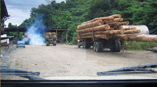 La mafia du bois blanchit son argent chez ubs sauvons la for t - Blanchir du bois ...