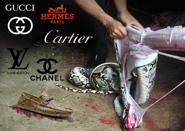Demo reptiles Paris