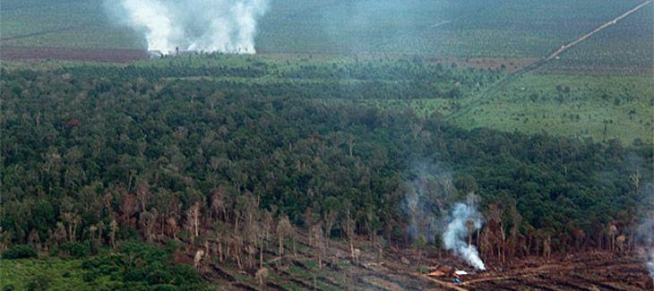 Vue aérienne d'un paysage composé de tourbières en train d'être incendiées et de cultures d'huile de palme en arrière plan