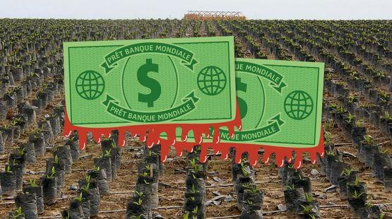 Photomontage. Au premier plan, des dollars de la Banque mondiale tachés de sang- À l'arrière plan, vue aérienne sur une monoculture de palmiers à huile