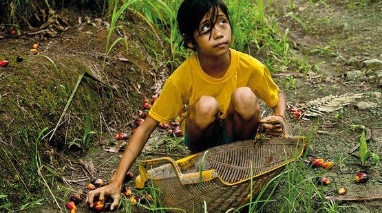 Une jeune fille récolte des fruits sur une plantation de palmiers à huile