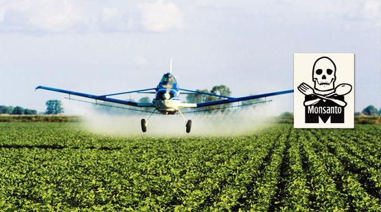 Un avion pulvérise des pesticides sur une plantation de soja
