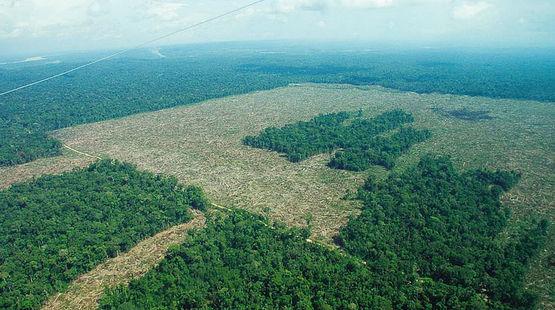 Vue aérienne de forêts humides partiellement défrichées en Colombie