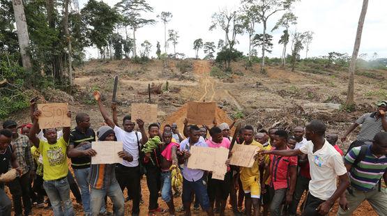 Au milieu d'une forêt tropicale défrichée, des paysans nigérians manifestent contre les agissement du groupe Wilmar dans leur pays