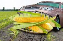 Photomontage : une automobile dévore des épis de maïs géants