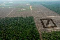 Vue plongeante sur une forêt intacte en bas à gauche et défrichée sur le reste de l'image. Collage du logo carré de la Deutsche Banque en perspective à droite sur la zone déboisée.
