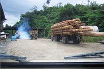 Un camion avec un chargement de troncs d'arbres coupés roule sur une route en terre au milieu de la forêt